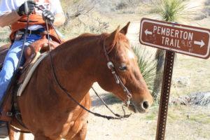 horses,zoning,cattle,maricopa county,arizona